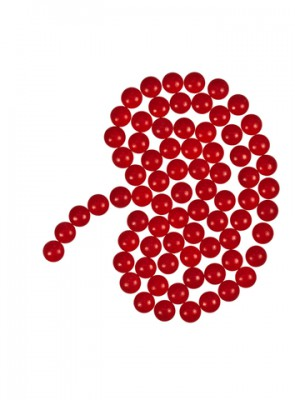 kidney image made of small red balls